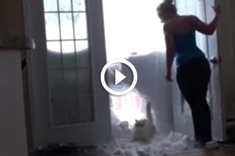 Ce chat défonce la neige