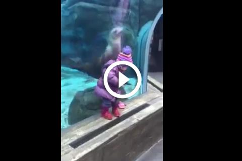 Complicité entre un lion des mers et une petite fille