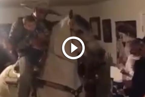 Un cheval qui danse dans la maison