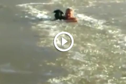 chien sauvé dans un lac gelé