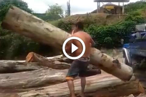 force herculienne dun homme qui soulève un tronc d'arbre