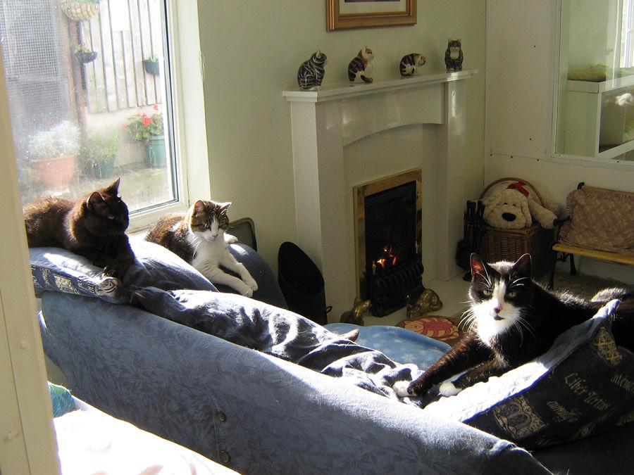 la 1ere maison de retraite pour chats 02