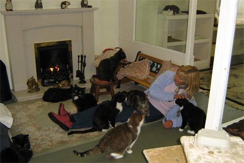 la-1ere-maison-de-retraite-pour-chats