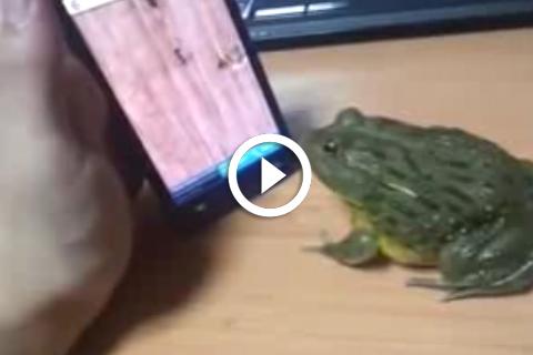 ne pas énerver une grenouille
