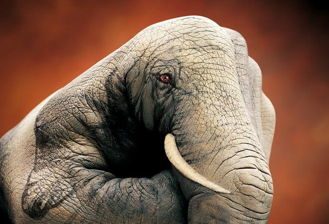 body-painting éléphant