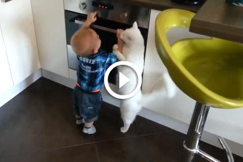 chat protecteur envers le bébé de la famille