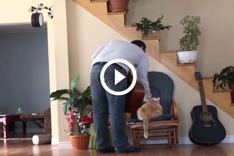 chat qui se venge